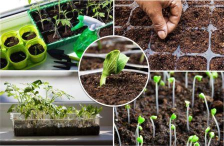 Коли сіяти та садити насіння на розсаду у 2021 році