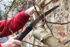 Які роботи в саду необхідно виконати в лютому?