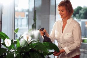 Догляд за кімнатними рослинами