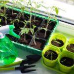 Чим підгодувати розсаду для гарного росту: кращі народні засоби