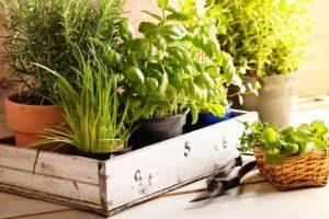 Підготовка ґрунту до вирощування