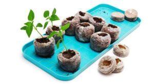 Вирощування перцю в торф'яних таблетках