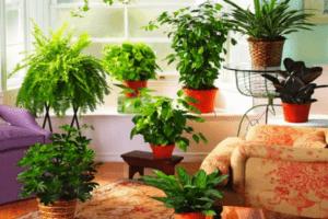 Календар для кімнатних рослин на лютий 2021 рік - фото