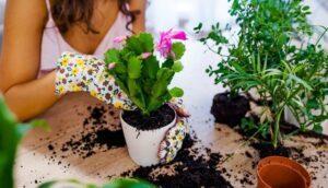 Сприятливі дні квітникаря в лютому 2021 роки для кімнатних рослин