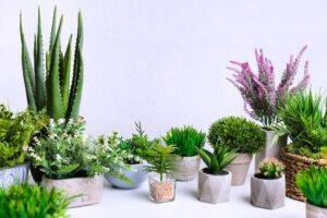 Як фази Місяця впливають на квітучі і декоративні рослини