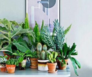 Поради та рекомендації по догляду та вирощуванню за кімнатними рослинами в лютому 2021 року