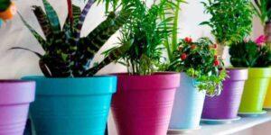 Обрізка комнтаних рослин в кінці зими 2021 року