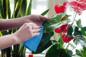 Повноцінний догляд і вирощування кімнатних рослин